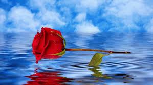 Roos-met-water